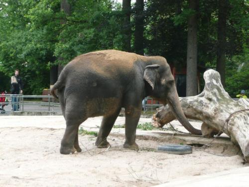 Slon si hraje.